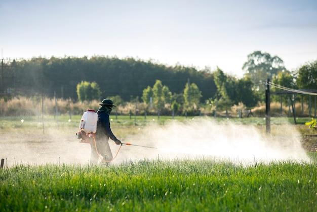 Groentetuinders vrij van chemicaliën om ongedierte, bemesting, onderhoud te voorkomen.