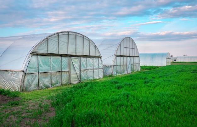 Groenteveld met zaailingen bedekt met spingebonden en polyethyleenfolie om vocht en tegen grondvorst in de lentetuin te houden