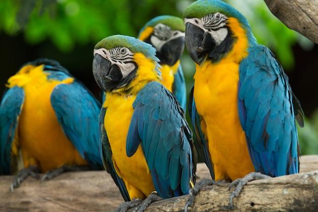 Groep ara vogel