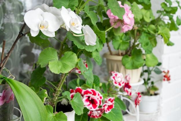 Groep bloeiende kamerplanten op vensterbank
