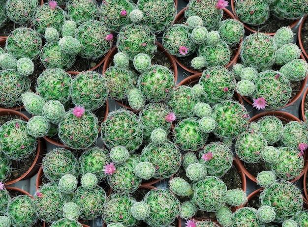 Groep cactus en succulent in oranje pot voor achtergrond