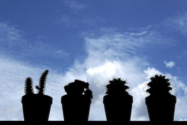 Groep cactus in tegenlicht op vage wolken op de blauwe hemelachtergrond