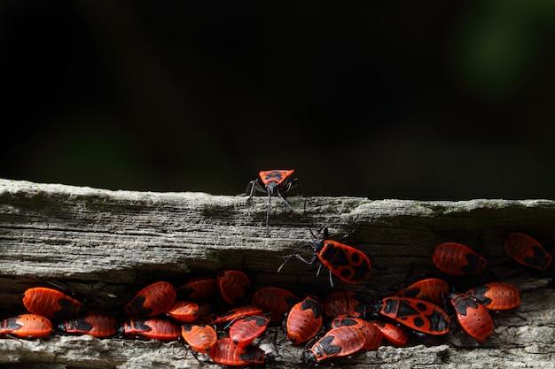 Groep firebugs op een logboek van hout