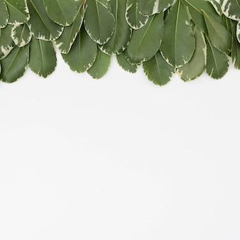 Groep groene bladeren op witte oppervlakte