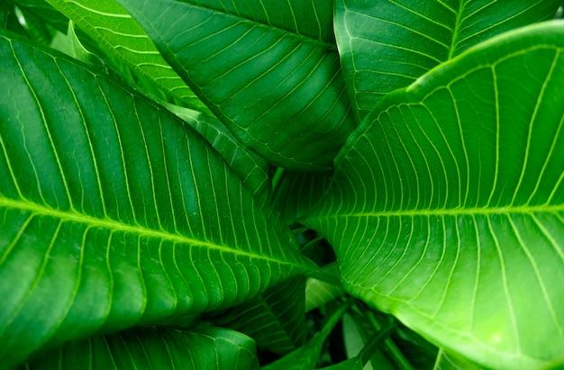 Groep groene geconcentreerde blad achtergrondclose-upmening en vlek.