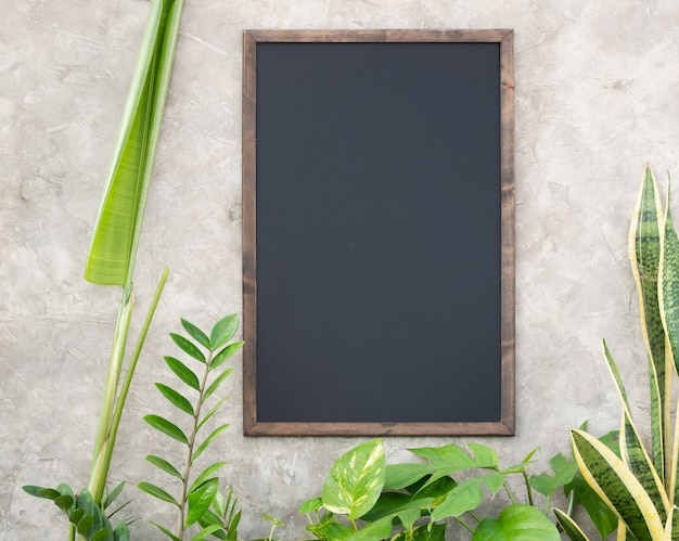 Groep groene kamerplant met monstera aglaonema chinese evergreen ficus elastica gevlekte betel zamioculcas zamifolia paradijsvogel bromelia en bespotten zwart bord op betonnen muur oppervlak