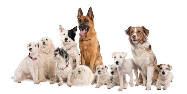 Groep honden: duitse herder, border collie, parson russell terrier en een kruising
