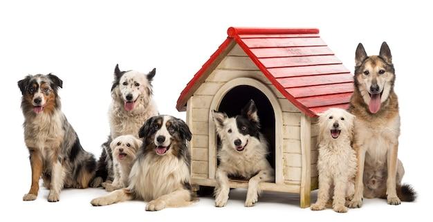 Groep honden in en rond een kennel tegen een witte achtergrond