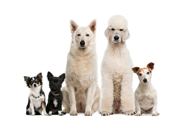 Groep honden voor een witte muur