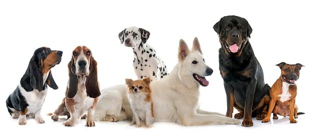 Groep honden