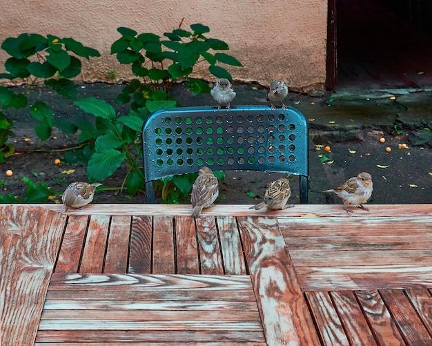 Groep hongerige mussen zit op een tafel en wacht. er is een vrije ruimte aan de onderkant van de afbeelding om de tekst of uw object te plaatsen.