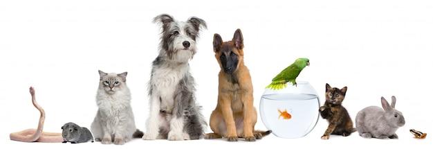 Groep huisdieren op witte achtergrond