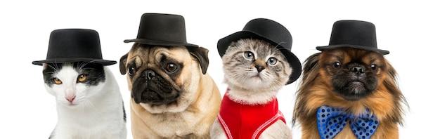 Groep katten en honden die een zwarte hoed dragen