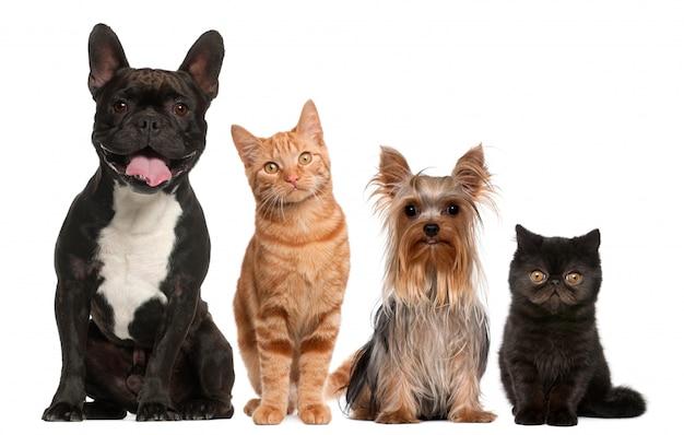 Groep katten en honden