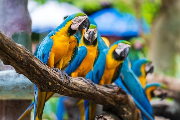 Groep kleurrijke ara op boomtakken