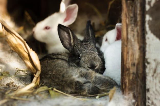 Groep konijnen binnen schuilplaats bij landbouwbedrijf