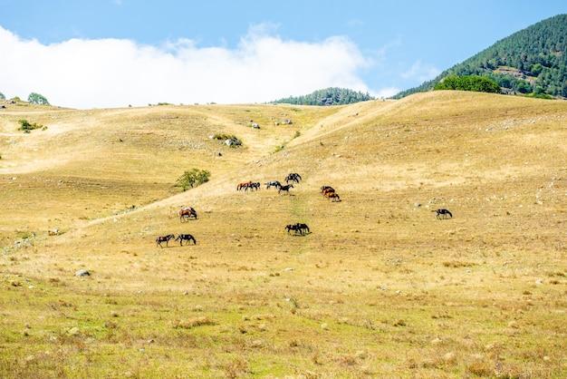 Groep paarden die samen gras eten in een veld paarden in een weiland