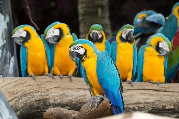 Groep papegaaien