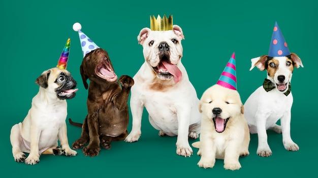 Groep puppy die een nieuw jaar viert