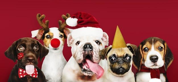 Groep puppy die kerstmiskostuums draagt