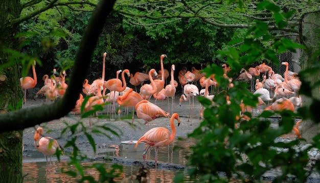 Groep rode flamingo's bij het water, met groen gebladerte