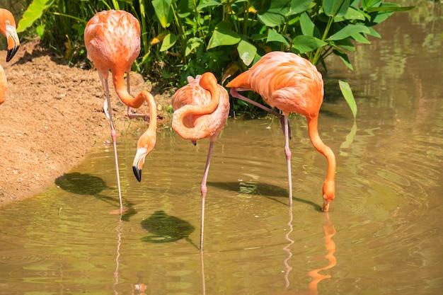 Groep roze en oranje flamingo's die zich in een vijver bevinden