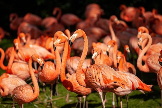 Groep roze flamingo's op een groene weide