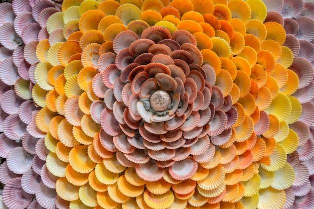 Groep schaaldieren en tweekleppige schelpdier detaill textuurachtergrond