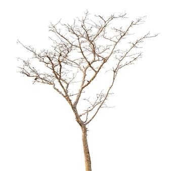 Groep van dode boom geïsoleerd op wit