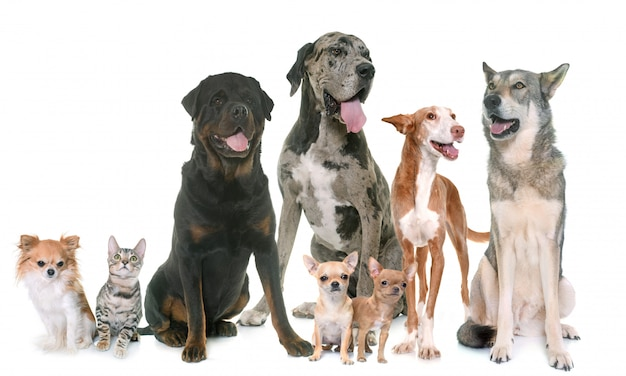 Groep van huisdieren