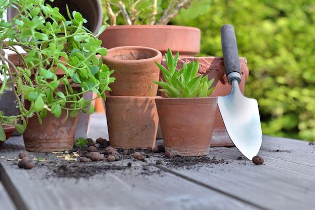 Groep van terracotta bloempotten en vetplant op een tuintafel met schop
