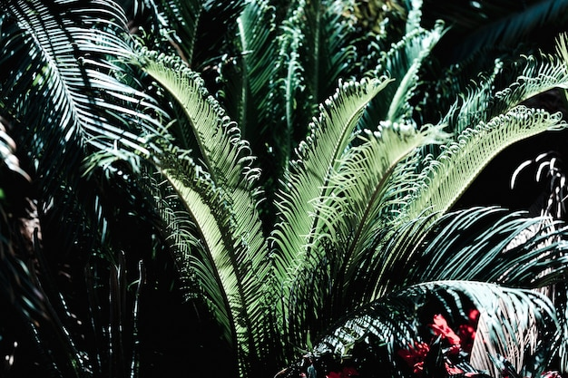 Groep van tropische groene bladeren