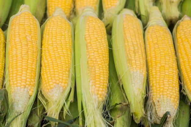 Groep verse zoete maïs op een winkel. enkele verse organische maïskolven met bladeren. een groep verse maisjes in bazaar voor het zomerseizoen