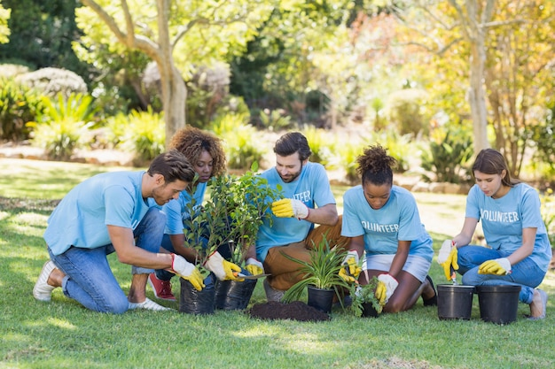 Groep vrijwilligers planten