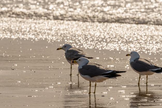 Groep zeemeeuwen op een strand