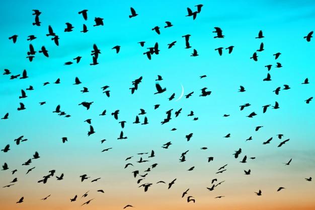 Groepen vogels die bij zonsondergang op maanachtergrond vliegen.