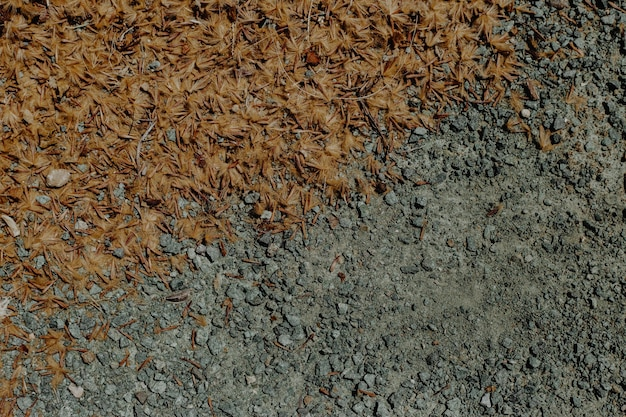 Grondstructuur met droge bladeren