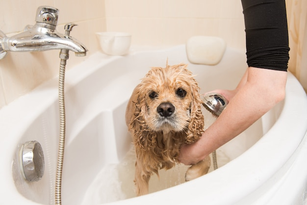 Groomer wast de hond met schuim en water
