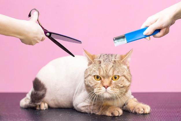 Groomers die hulpmiddelen houden bij de handen. roze achtergrond. concept-procedure voor trimmer met trimmer.