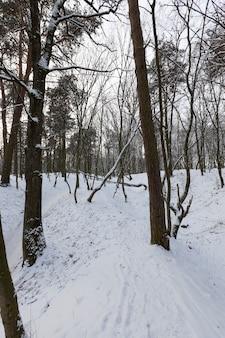 Groot aantal kale loofbomen in het winterseizoen, de bomen zijn bedekt met sneeuw na vorst en sneeuwval, sneeuwbanken in het park of winterbos, er zullen voetafdrukken in de sneeuw zijn