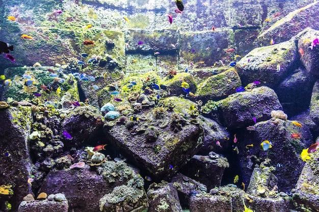 Groot aquarium in dubai, verenigde arabische emiraten