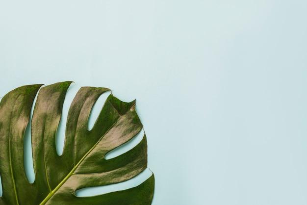 Groot blad op blauw