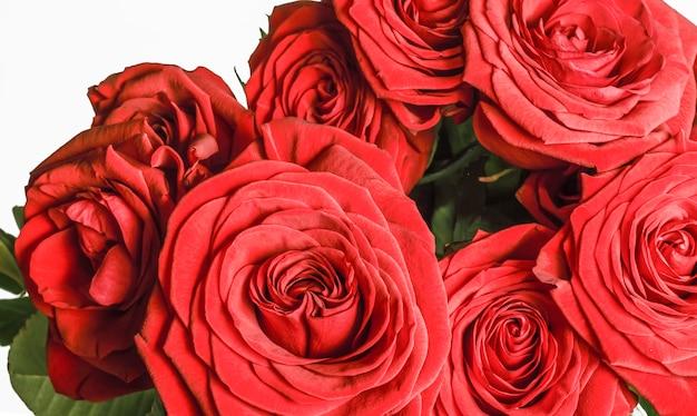 Groot boeket van dieprode rozen op een witte achtergrond.