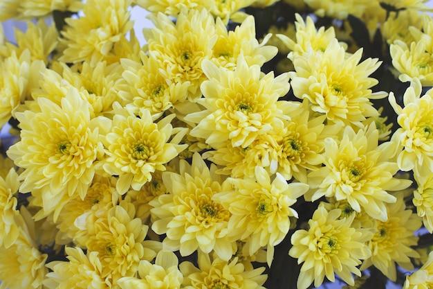 Groot boeket van gele chrysanten bovenaanzicht. mooie bloemenachtergrond