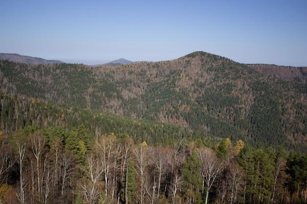 Groot bos bergdal van bovenaf. wandelen in de bergen.