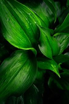 Groot gebladerte van tropische bladeren in het donker