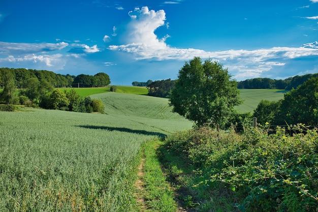Groot landschap van groen gras en bomen onder de blauwe hemel