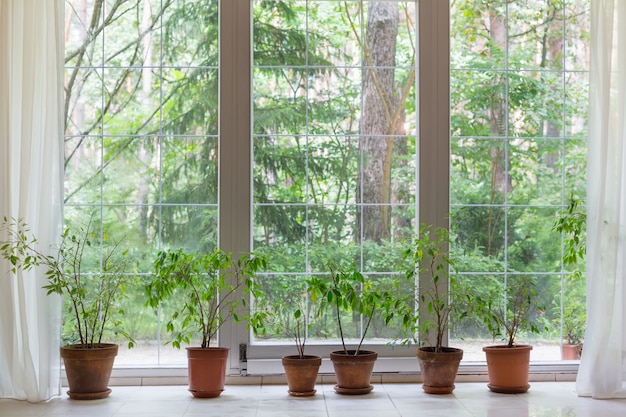 Groot raam en kamerplanten met uitzicht in zomerbos