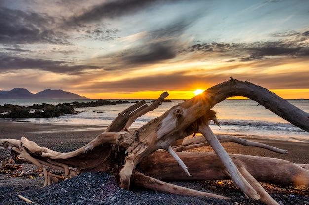 Groot stuk drijfhout dat in het zand zit