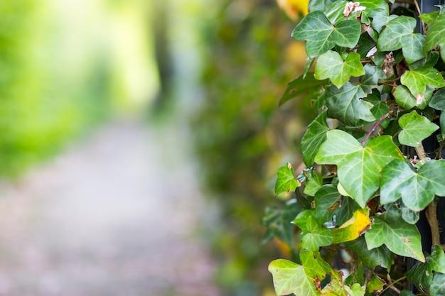 Groothoek opname van de bladeren van een plant in het park